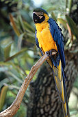 Parrot sitting on tree branch, FL, USA, (Close-up)