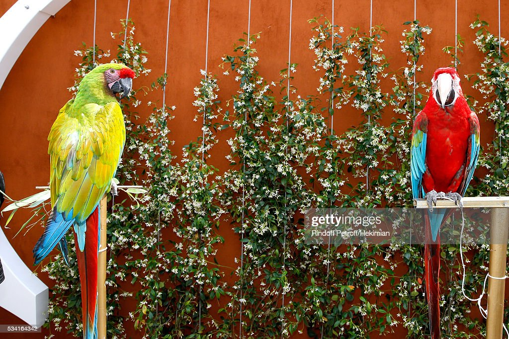 Parrots Arthur (R) and Zoe (L) attend the 2016 French Tennis Open - Day Four at Roland Garros on May 25, 2016 in Paris, France.