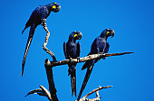 Parrots having a break