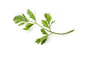 Parsley, Herb, Vegetable, Food, Ingredient, Condiment