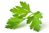 A leaf of parsley isolated on white background