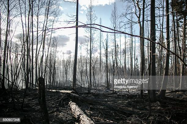 A part of burnt forest is seen during a wildfire that erupted outside Fort McMurray Alberta Canada on May 11 2016 Wildfire erupted on 3 May consuming...