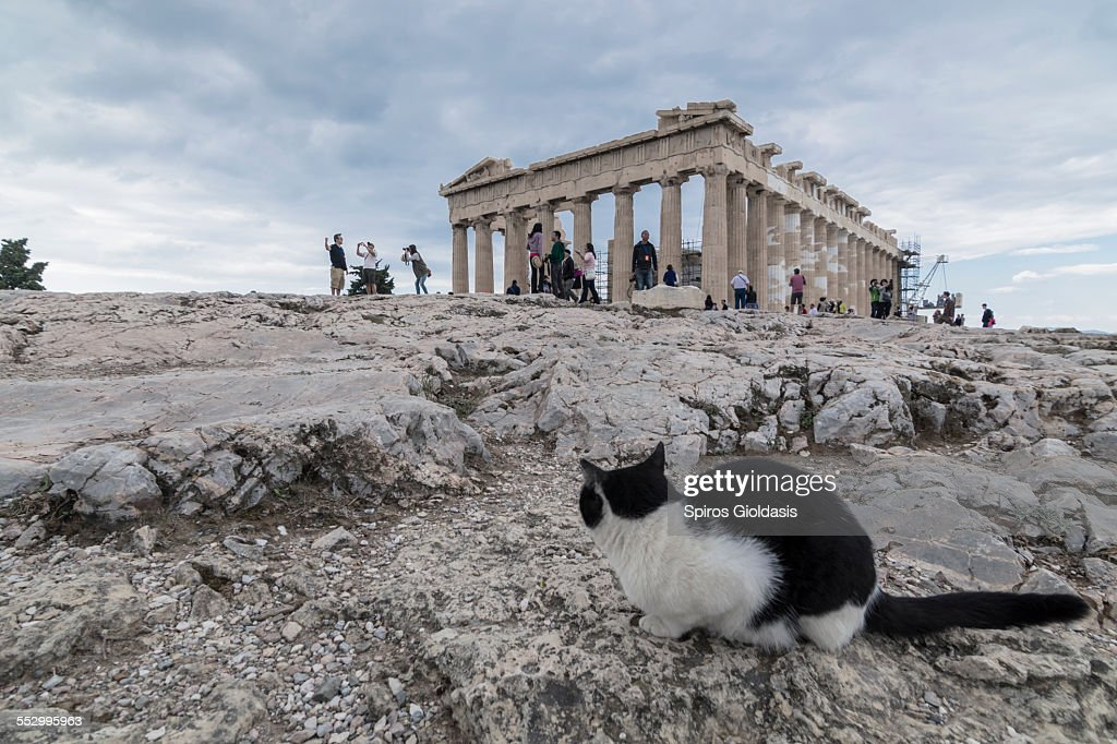 Parthenon : Foto de stock