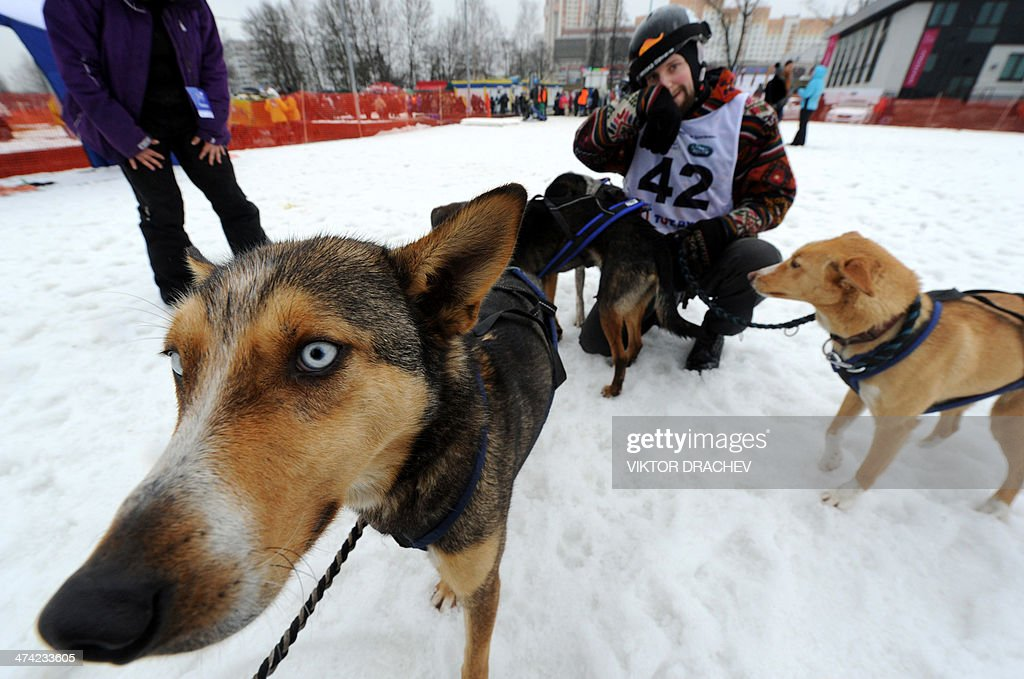 A participant and his dogs attend international dog sled race 'Zavirukha' (Snow Storm) in the Belarus capital Minsk on February 22, 2014. About 140 athletes from Belarus, Russia, Latvia and Lithuania take part in competitions.