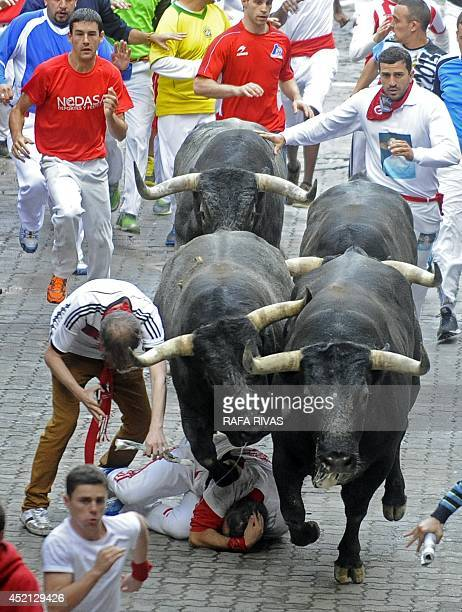 A participant falls in front of Miura bulls during the last bullrun of the San Fermin Festival in Pamplona northern Spain on July 14 2014 The...