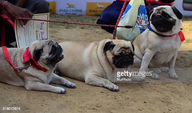 Participants carry their pets during Dog show in Allahabad on March 292016