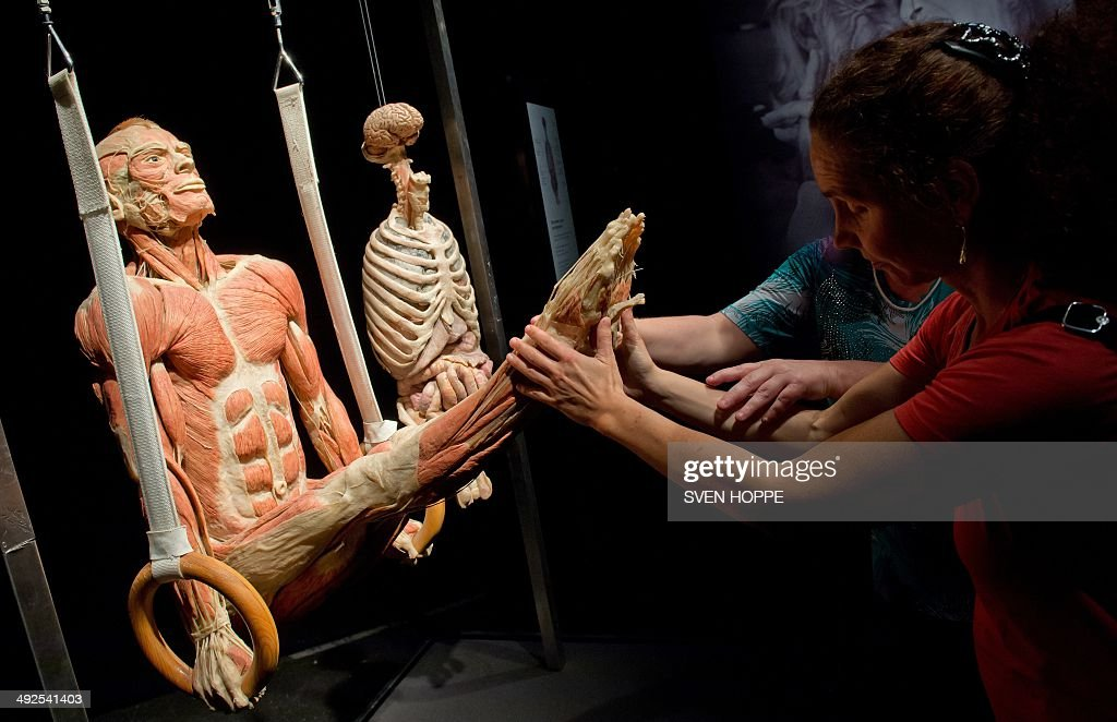 Participants of a special guided tour for visually handicapped persons touch a plastinate displayed at the exhibition 'Body World' (Koerperwelten) in Munich, southern Germany on May 20, 2014. The exhibition by controversial plastinator Gunther von Hagens runs until October 5, 2014.