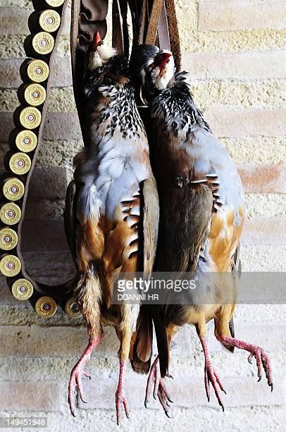 Partridges and cartridges
