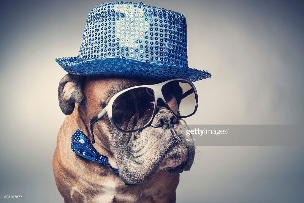 Party dog : Stock Photo