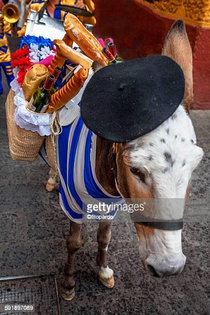 Party Donkey in San Miguel de Allende