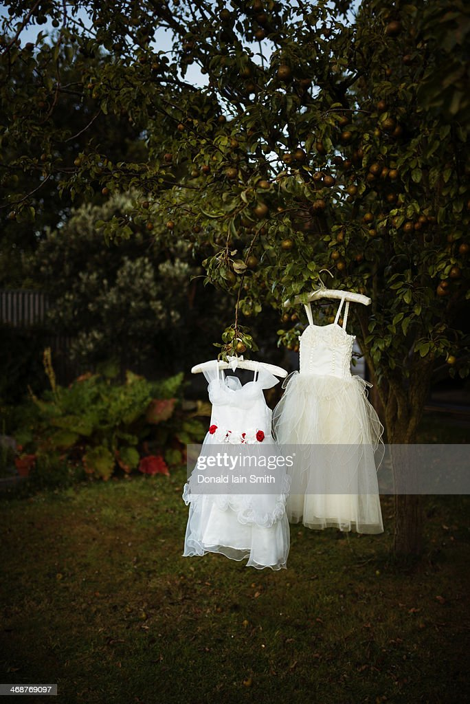 Party frocks in tree : Stock Photo