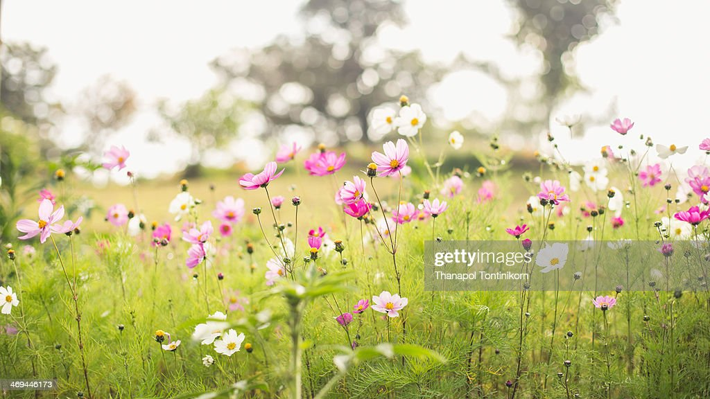 Party of flowers : Stock Photo