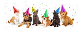 A large group of young kittens and puppies together wearing party hats with confetti falling