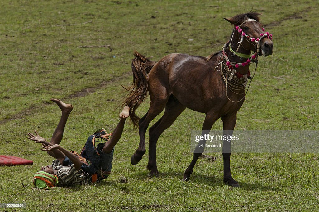 A Pasola rider falls after hit by spear during the pasola war festival at Wainyapu village on March 7, 2013 in Sumba Island, East Nusa Tenggara, Indonesia. Sandalwood pony horses are native to the island of Sumba in Indonesia. For the people of Sumba, the Sandelwood horse has an important role in all aspects of their daily life, including transportation and culture. On the island of Sumba the ancient tradition of Pasola still draws large crowds and tourists. Pasola involves two teams of men on horseback charging towards each other.