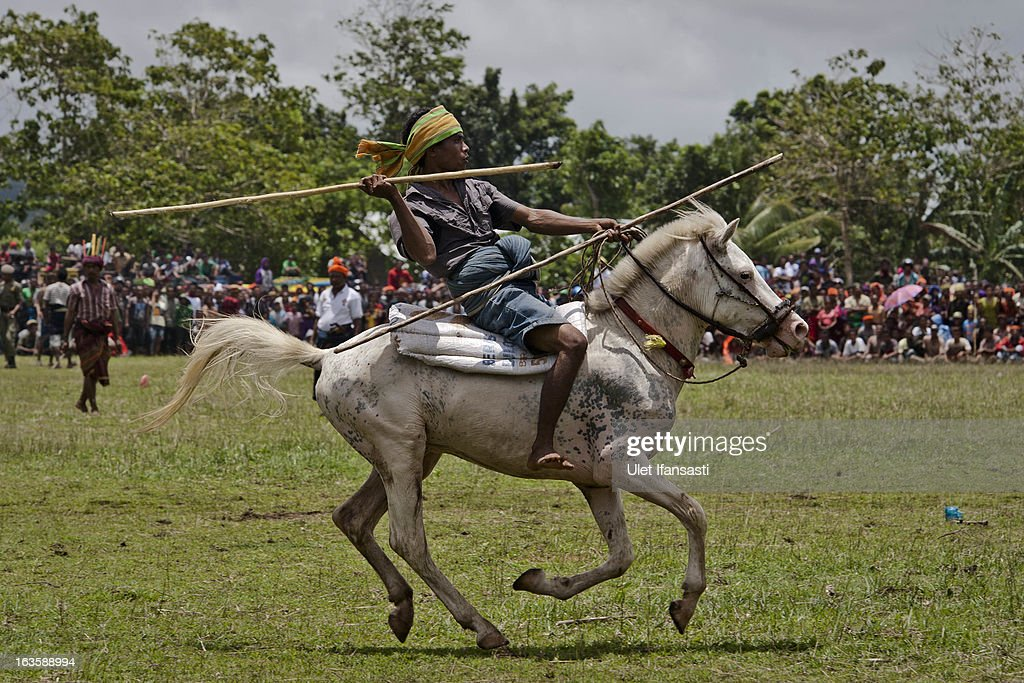 A Pasola rider prepares throw his spear during the pasola war festival at Wainyapu village on March 7, 2013 in Sumba Island, East Nusa Tenggara, Indonesia. Sandalwood pony horses are native to the island of Sumba in Indonesia. For the people of Sumba, the Sandelwood horse has an important role in all aspects of their daily life, including transportation and culture. On the island of Sumba the ancient tradition of Pasola still draws large crowds and tourists. Pasola involves two teams of men on horseback charging towards each other.