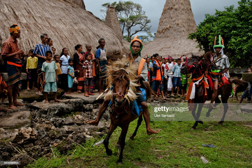 Pasola riders perform for ritual in their village before heading to the main pasola field during the pasola war festival at Wainyapu village on March 7, 2013 in Sumba Island, East Nusa Tenggara, Indonesia. Sandalwood pony horses are native to the island of Sumba in Indonesia. For the people of Sumba, the Sandelwood horse has an important role in all aspects of their daily life, including transportation and culture. On the island of Sumba the ancient tradition of Pasola still draws large crowds and tourists. Pasola involves two teams of men on horseback charging towards each other.