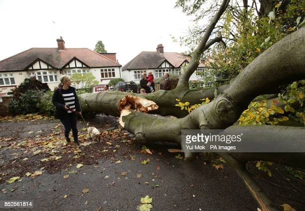 Passersby examine a fallen tree lying across the road due in Shepherd's Hill north London due to the storm affecting parts of the UK