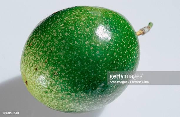 Passions Fruit (Passiflora edulis)