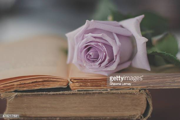 Pastel Mauve Rose on Books