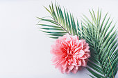 Pastel pink flower and tropical palm leaves on white desktop background, top view, creative layout with copy space, border