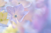 Pastel sweetness