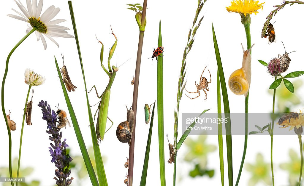 Pastoral composition of flowers and insects : Stock Photo
