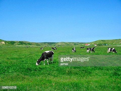 Pasturage : Stock Photo