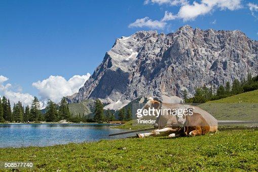 Pasture idyll on Seeebensee lake : Stock Photo