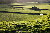 Pasture in Yorkshire Dales, Yorkshire, England
