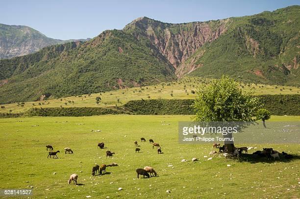 Pasture near Dushanbe
