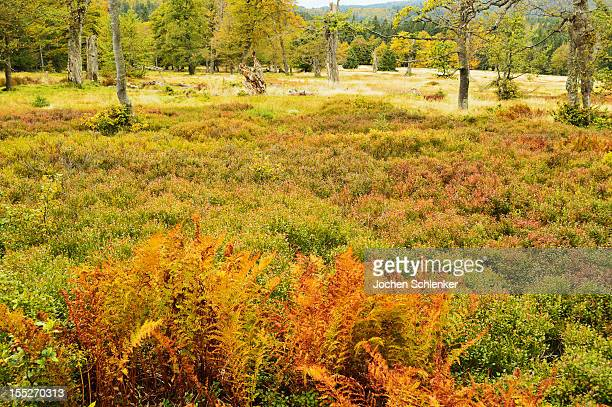 Pasture with autumn colors
