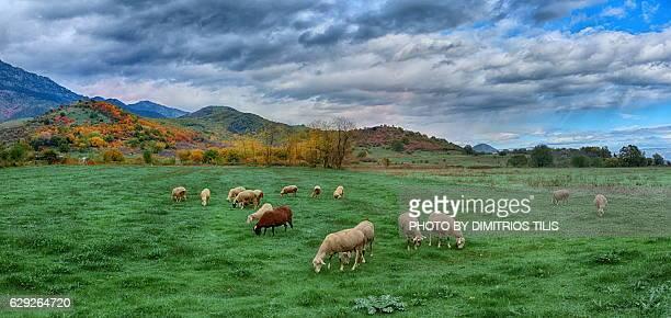 Pastures panorama 2