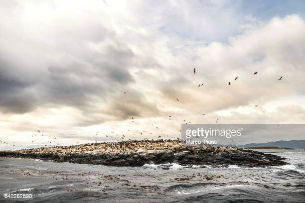 Patagonia - View of Cormorant Bird Colony on Island