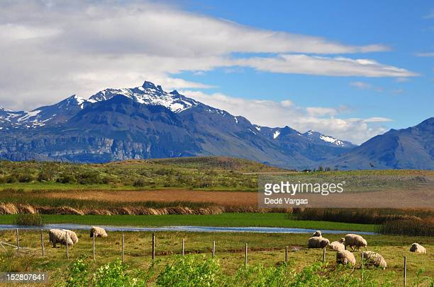 Patagonian lamb in Perito Moreno