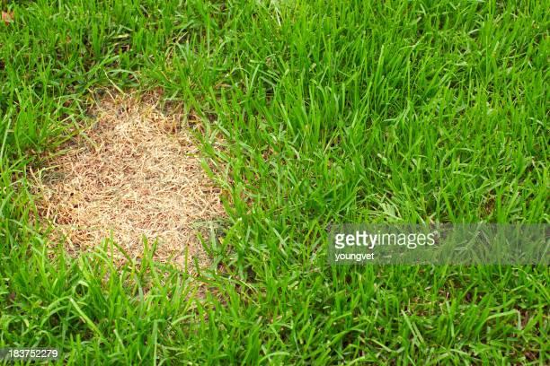 Aufnäher des Toten Gras