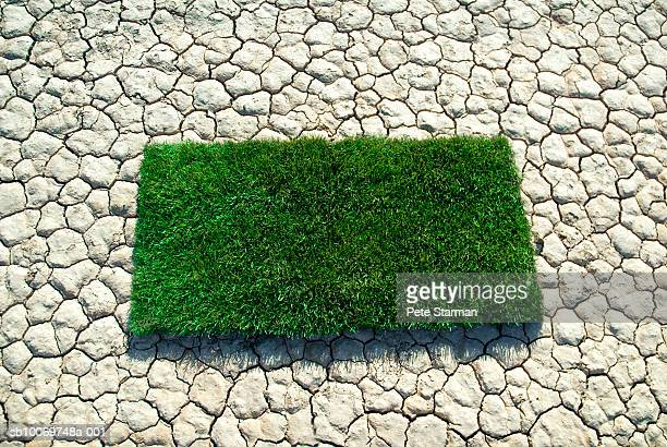 Patch of grass on dry lake bed