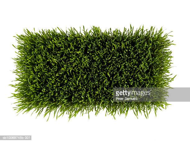 Patch of green grass on white background