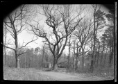 Patchogue / Bell Port / Yaphank / Brookhaven / Middle Island / Selden / Corem unidentified narrow country road with house visble through bare trees...