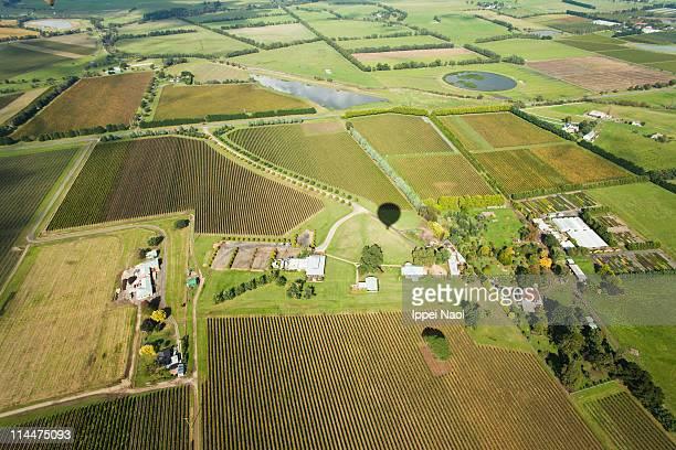 Patchwork fields of vines, Victoria, Australia