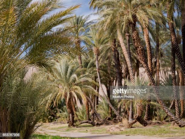 Path Among the Palms