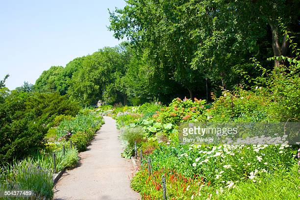 Path between slopes of perennial garden