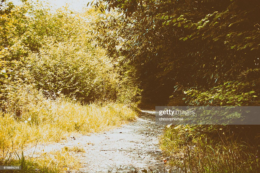 Path going through the trees in an english wood : Stock Photo