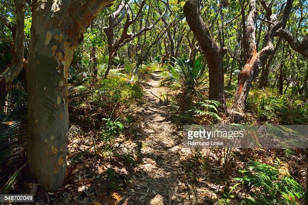 Path in Bush