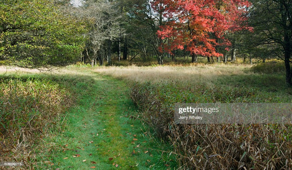 Path in Canaan Valley, WV : Stock Photo