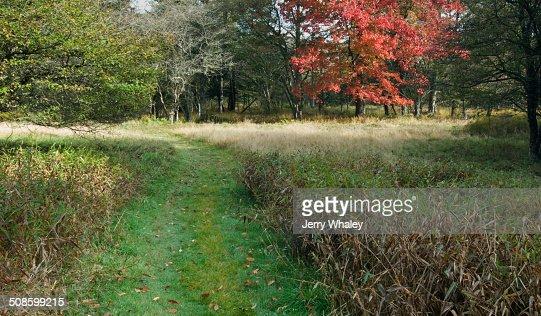 Path in Canaan Valley, WV : Foto de stock