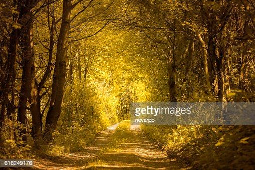 Camino en el bosque de oro : Foto de stock