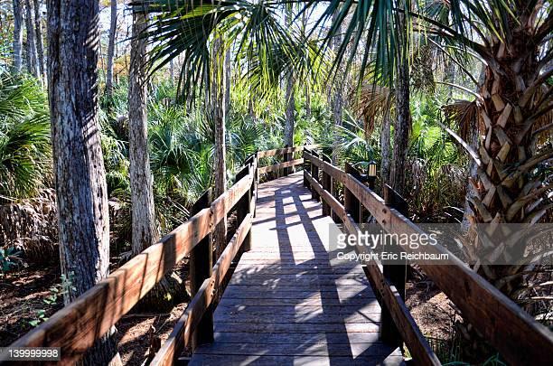 Path in palms