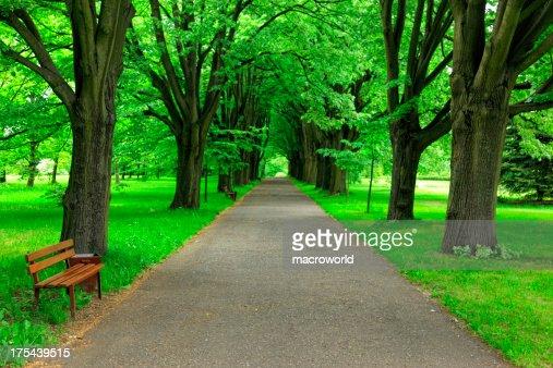 パスの公園