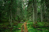 Wooden path in wild forest.