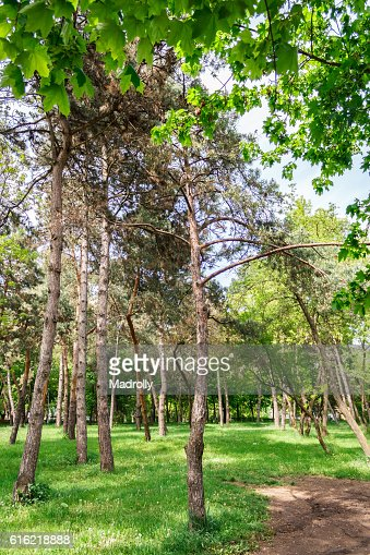 Path in the park : Stock Photo